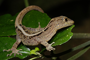 Lizards and Amphibians